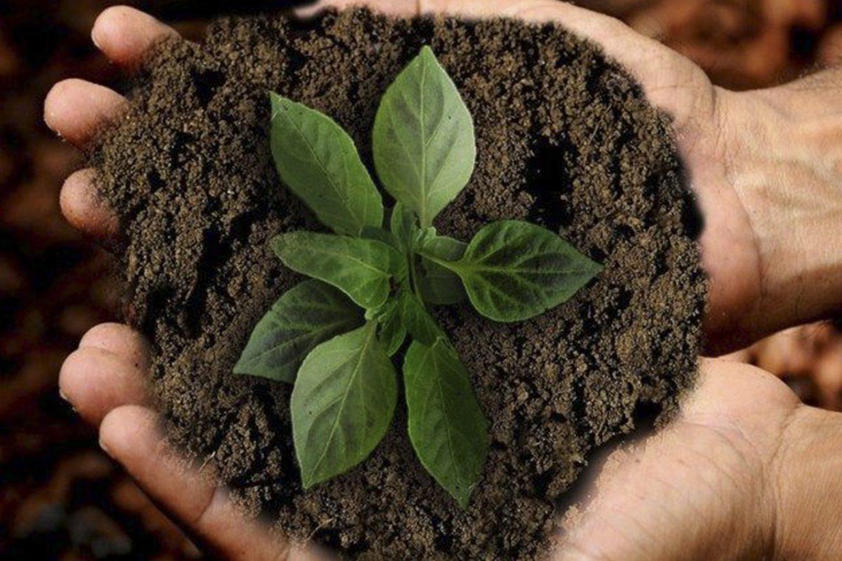 Día de la Tierra: la Iglesia católica llama al cuidado del medio ambiente